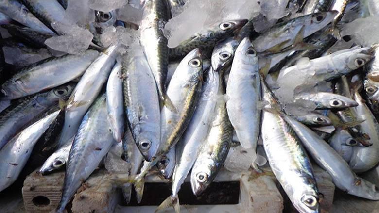 ضبط 3 أطنان ونصف من الأسماك المنتهية الصلاحية