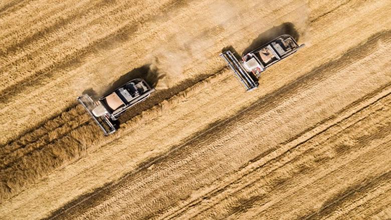 روسيا ترسل أكثر من 2 طن من القمح إلى كوريا الشمالية كمساعدات إنسانية