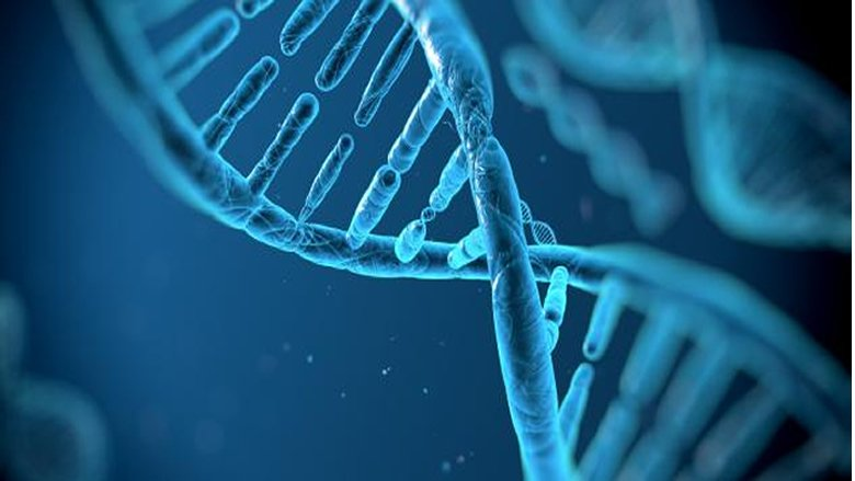 نتائج الحمض النووي للهياكل العظمية في صيدا