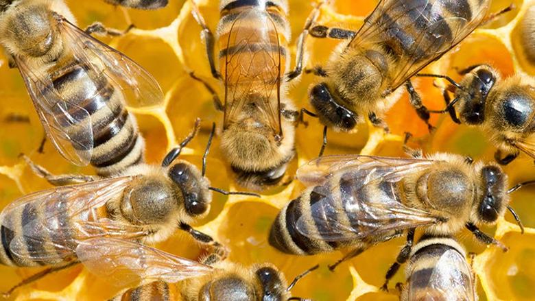 هذه فوائد النوم في غرفة واحدة مع النحل
