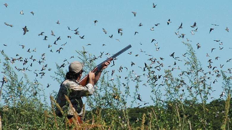 بيان لوزارة البيئة بشأن موسم الصيد