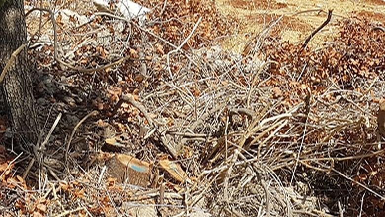 مجزرة بيئية في مجدل بلهيص بعد قطع اكثر من 1500 شجرة سنديان