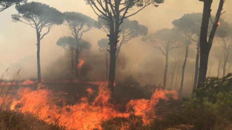 الحرائق تلتهم أحراجاً في البترون والأهالي يطالبون بتحقيق عاجل