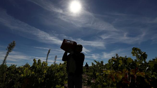 الهيئات الزراعية: لإستثناء العاملين في القطاع من قرار الإقفال