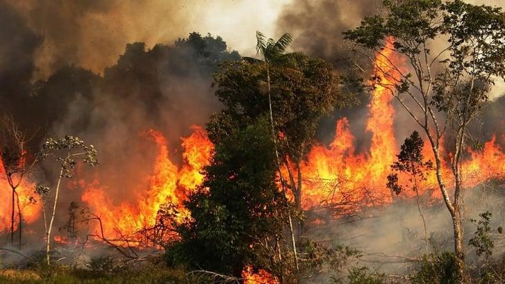 بالفيديو: حريق في بلدة باتر الشوف على مقربة من مناطق سكنية