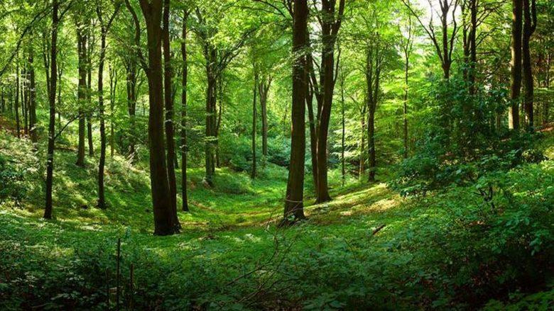 رؤية الغابات تحمي من التوتر…