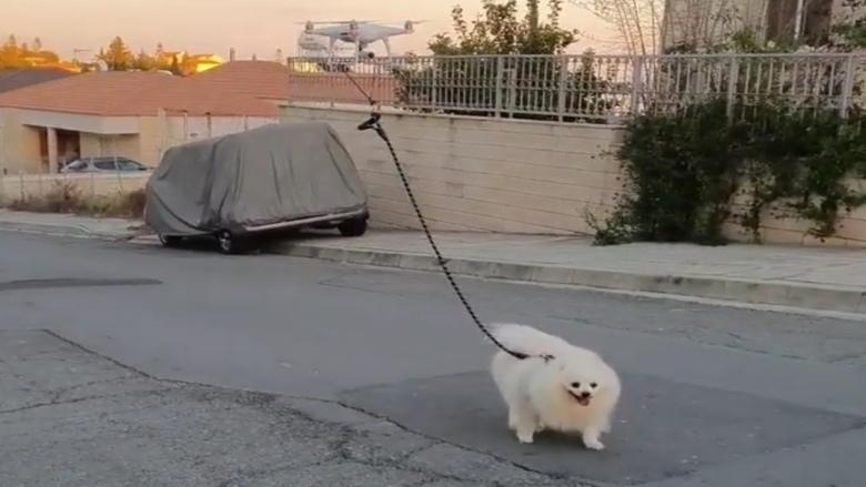 بسبب الحجر المنزلي... رجل يبتكر أغرب طريقة لتنزيه كلبه