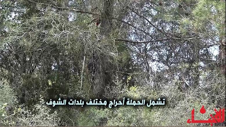 """حملة لمكافحة """"الصندل"""" في أحراج الصنوبر في الشوف"""