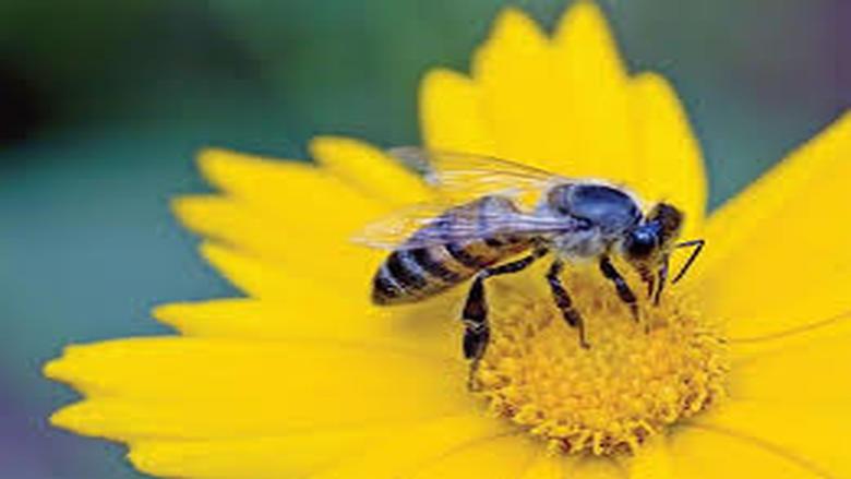 كتاب تربية النحل من البداية الى النهاية