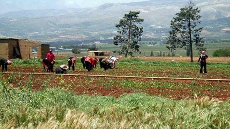 توزيع أدوية زراعية في الكورة بدءا من الأربعاء
