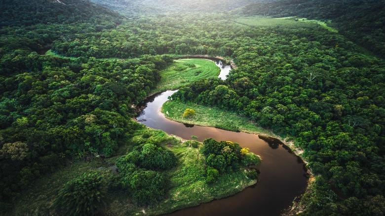 تراجع مقلق لمساحات الغابات.. وثلث الخسائر في البرازيل