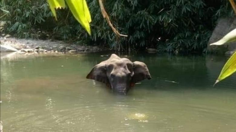 غضب في الهند بعد نفوق أنثى فيل حامل