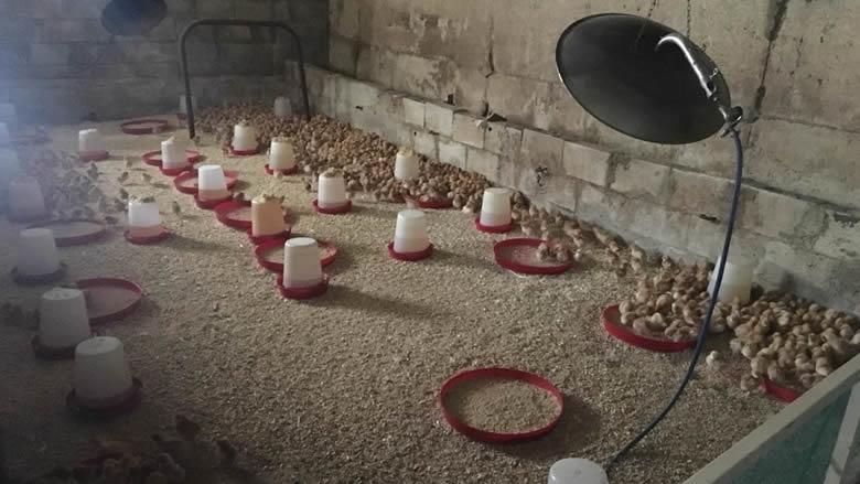 مكتب الزراعة في الجرد يطلق مشروع تربية الدجاج