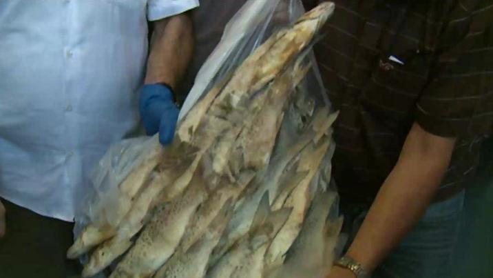 مدير عام وزارة الزراعة يضبط 15 طنا من الاسماك المجمدة المنتهية الصلاحية