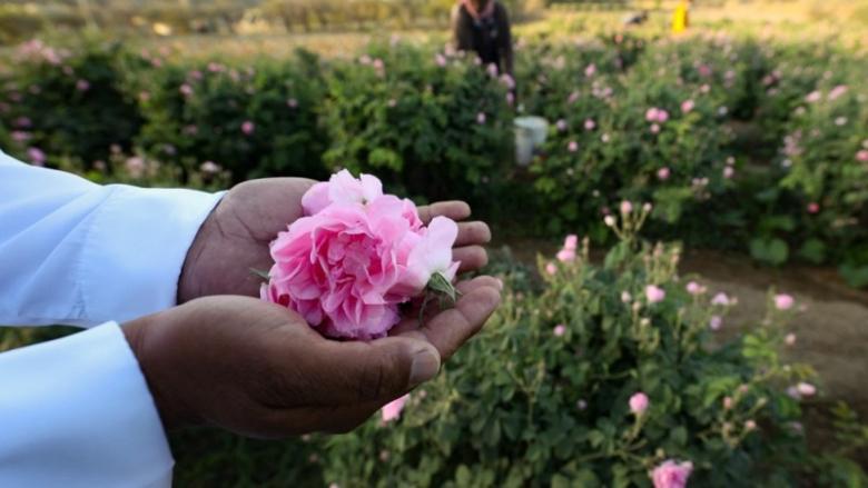 مدينة الورود في السعودية تزدهر في شهر رمضان