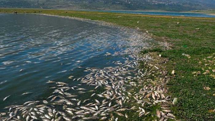 قلقٌ من دخول الأسماك النافقة إلى الأسواق والمخاطر تهدد الأهالي والطبيعة.. أما الدولة فغائبة