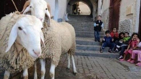 احتجاب شبه تام لمظاهر العيد... الفقر والكآبة يطغيان!