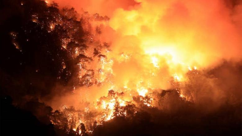 مصرع أربعة وإصابة ثلاثة في حرائق غابات بالجزائر
