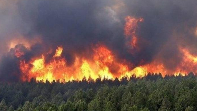 """""""غوغل"""" يتضامن مع ضحايا الحرائق في الجزائر"""