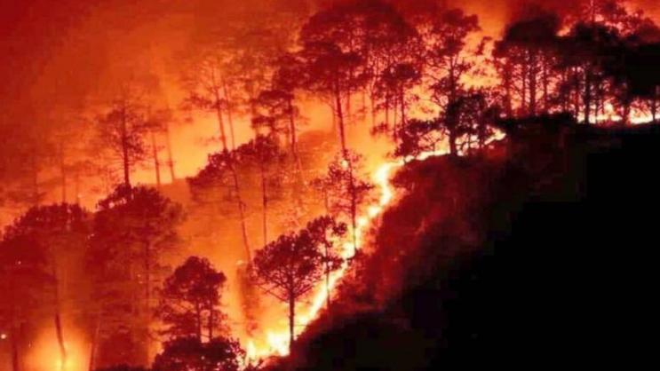 نداء وخطوات عاجلة الآن.. قبل أن تلتهم الحرائق ما تبقّى من لبنان الأخضر