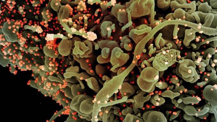 منظمة الصحة: توقف البحث عن منشأ فيروس كورونا في الصين